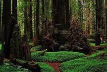 Trees / by Kathleen Syracuse
