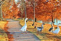 Autumn Scenes / by Pam Thompson