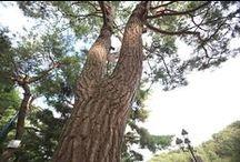 摂理自然聖殿・木、道、山、谷、洞窟(月明洞・WOLMYEONGDONG)