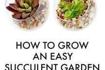 GARDENING / Great ideas and tips for gardening. From indoor to outdoor, this board has amazing ideas and beautiful inspiration for your landscapes.