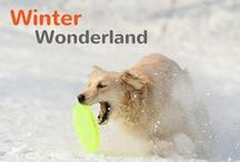 Winter Wonderland / Find out everything you need to know about how to keep your pets happy, healthy and strong during the long moths of winter! / by Pet360.com