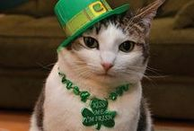 St Patrick's Day cats / by Yvonne Naudack