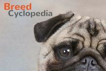 Breed-Cyclopedia / All the information you've ever wanted to know about our four-legged canine friends. Let us know which breed is your favorite by re-pinning and tweeting us @Pet360! / by Pet360.com