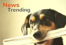 News You Need To Know / Find out which animal news are trending in the world!  / by Pet360.com