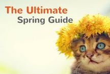 The Ultimate Spring Guide / Everything you need to make your pet's spring sensational. / by Pet360.com