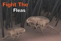 Fight The Fleas / Find out everything you need to know about Fleas & Ticks / by Pet360.com