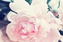 ♥ Flowers   Photography  FineArt ♥ / Flowers, Flowers and Flowers!!! #OksanaAriskina #OksanaAriskinaFineArtPhotography #Artworks #FineArtPhotography #FineArtAmerica   #HomeDecor #PrintsForSale #FineArtPrints #FineArtFlowers for sale #Flowers www.oksana-ariskina.pixels.com @pixels @fineartamerica