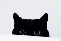little ball of fur; / sleepy kitty, happy kitty, purr, purr, purr. / by Livia Cristina