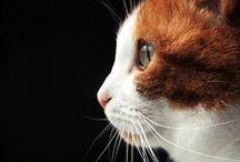 Crazy Cat Lady  / by Sarah Lane