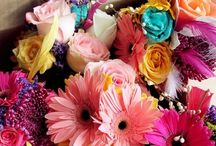 Flowers Flowers Flowers  / by Katie Tinney