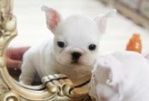-cuties-