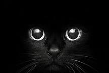 Meow / by Aspen Lofgren
