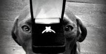 Pet Proposal Ideas