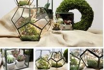 Terrariums Collection / Gardens aren't just for the outdoors! Our terrariums come in many unique shapes, sizes, & styles so you can creatively liven up your homes' interior. / by Christmas Central