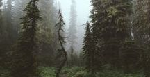 || The Forest ||