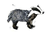 Badger / All things #badger