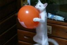 Cats / funny cats, funny cat memes, cute kitten.~loldamn.com~ / by LOL, DAMN !