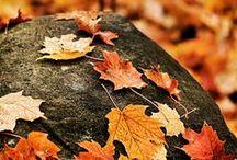 Autumn / by Taryn Garrett