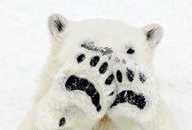 Alaskan Animals / by Pam Ellsworth
