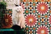 Kingdom of Morocco / by Amine Oulmouddane