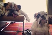 Bulldogs / by Whitney Leigh Roberts