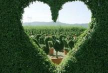 Amazing Gardens / by Maria Renata Leto
