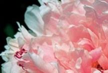 flowers / by Denise Swartz