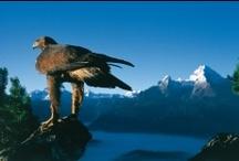 Nationalpark Berchtesgaden / Einst sollte mit dem Nationalpark Berchtesgaden der Natur ein Rückzugsgebiet geschaffen werden, heute erfüllt er zahlreiche Aufgaben rund um Naturschutz, Forschung, Erholung und Bildung. Die Naturschutzzone mit circa 21.000 Hektar ist ein unberührter Fleck Natur, in den der Mensch nicht eingreift. So konnte sich eine einzigartige Tier- und Pflanzenwelt ihren Platz zurückerobern. Ein Netz mit über 250 Kilometern Wanderwegen und Steigen macht den Nationalpark zum einmaligen Erholungsgebiet.