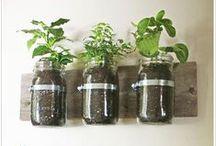 Gardening / Plants, vegetables, herbs. / by Cassandra Brown