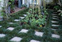 Gardening / Gardening. | Tuinmaak.