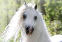 Horses / by Rebecca Raney