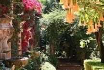 Garden ~ Landscapes