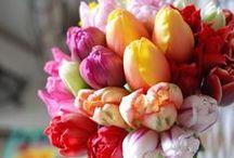 Flowers ~ Tulips