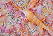 Seashells / by Michelle Utterback