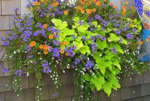 Window boxes / by Mary Beth Peters