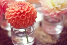 Tablescapes & Party Plans / A place for table decoration and party plan ideas.