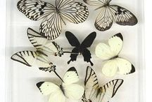 Creature Envy: Butterflys / by A F