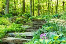 My 'one day' Garden