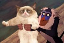 GRUMPY CAT! / by Hayley Pearce