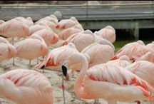 Flesh & Flamingoes