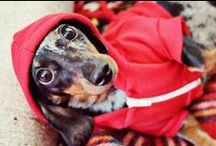 Dogs Wearing Clothes / by Jess Johnston