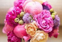 Fleur / by Amanda