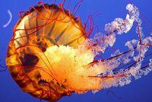 Treasures of the Sea / by Carol Eldridge