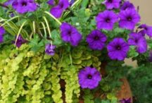 My Greenish Thumb / I love plants & flowers; wish I was better skilled at it.  This is the place where I can pin planting ideas - gardening, flowers, weed & pest control.
