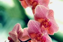 ORCHID + OBSESSION