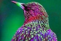 Birdies I Love / by Karen Gill