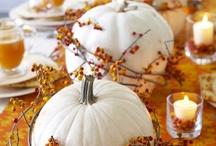 Fall & Halloween / by Brenda McCabe