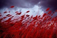 """...in the wind  / """"...Eppure il vento soffia ancora, spruzza l'acqua alle navi sulla prora, e sussurra canzoni fra le foglie, bacia i fiori li bacia e non li coglie.... eppure sfiora le campagne accarezza sui fianchi le montagne, e scompiglia le donne fra i capelli, corre in gara veloce con gli uccelli..."""" (P.Bertoli)"""