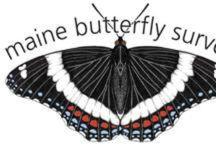 Everything Butterflies!