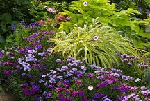 Shade garden / Plants that will thrive in the shade